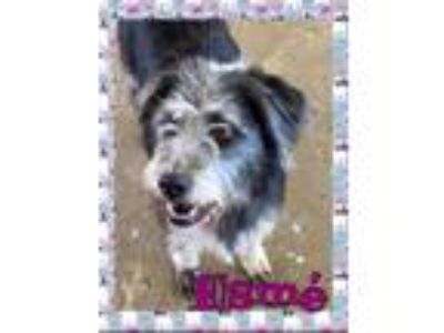 Adopt Esm a Terrier, Mixed Breed