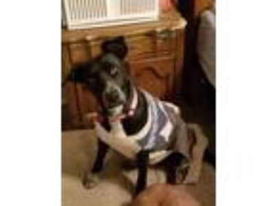 Adopt Lucy a Border Collie