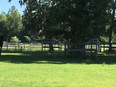 BEAUTIFUL 5 ACRES WITH 4 STALL HORSE BARN AND MORE!