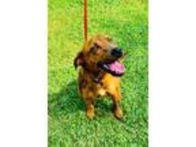 Adopt Oden a Mixed Breed (Large) / Mixed dog in Lake Jackson, TX (25548947)