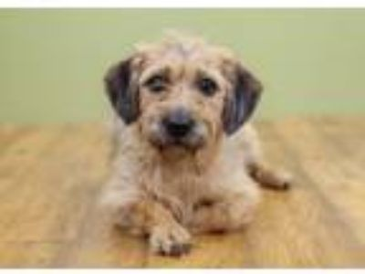 Adopt Tierney a Terrier, Mixed Breed