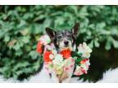 Adopt Lucille a Mixed Breed
