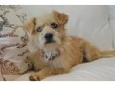 Adopt Lola a Terrier (Unknown Type, Medium) / Mixed dog in Birmingham