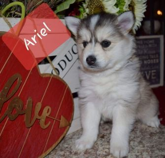 Craigslist Animals And Pets For Adoption Classified Ads In Amboy