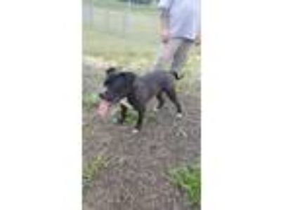 Adopt Owen a Black Mixed Breed (Large) / Mixed dog in BATH, NY (22628398)