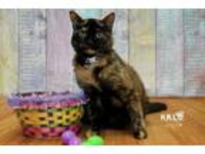 Adopt Flower a Domestic Short Hair