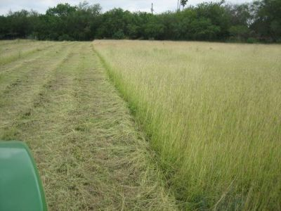 Tractor Work--Need a pasture, irrigation borders, discing (Edinburg RGV)