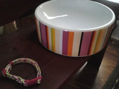 Dog/Cat Bowl and Collar-Dollar days