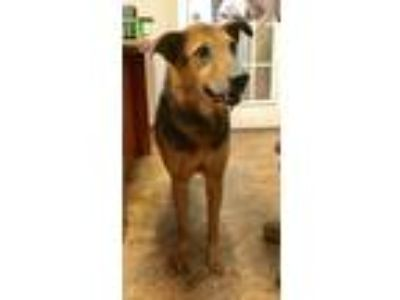 Craigslist - Dogs for Adoption Classifieds in Jackson