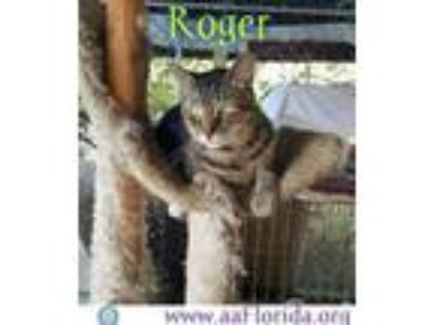 Adopt Roger a Tabby