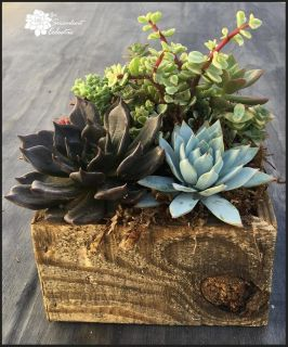 Succulents in Reclaimed Wood Planter Square
