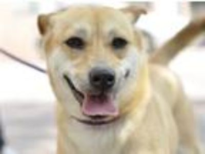 Adopt Lucy a White - with Red, Golden, Orange or Chestnut Mixed Breed (Medium) /