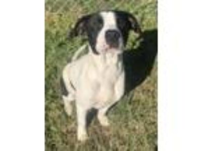 Adopt Blaze a Border Collie