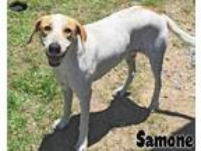 Adopt Samone a Hound (Unknown Type) / Mixed dog in Gautier, MS (25328317)