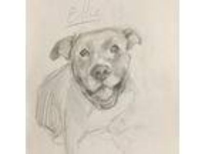 Adopt Ellie a Brindle Mastiff / American Pit Bull Terrier / Mixed dog in