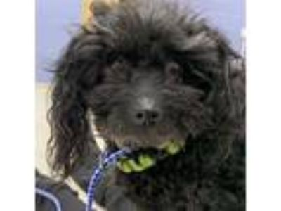 Adopt Dovey PA a Black Terrier (Unknown Type, Medium) dog in Jacksonville