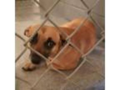 Adopt JoJo Available 6/19 @ 130 PM a Tan/Yellow/Fawn Mixed Breed (Medium) dog