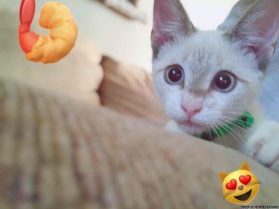 Free kitten to wonderful new home