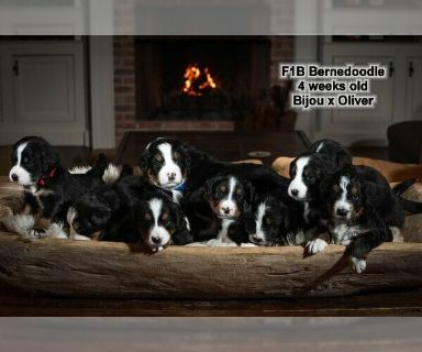 Craigslist - Dogs for Adoption Classifieds in Hopkinsville, Kentucky