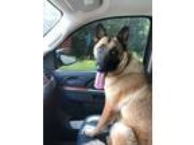 Adopt Wynona a German Shepherd Dog