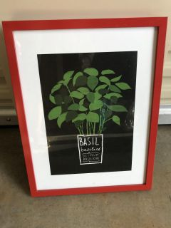 IKEA red frame with basil image