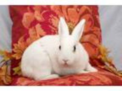 Adopt Linus a Bunny Rabbit