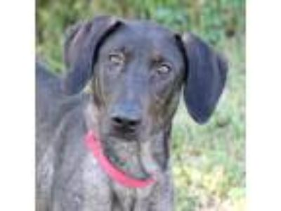 Adopt China a Black Retriever (Unknown Type) / Mixed dog in Loxahatchee
