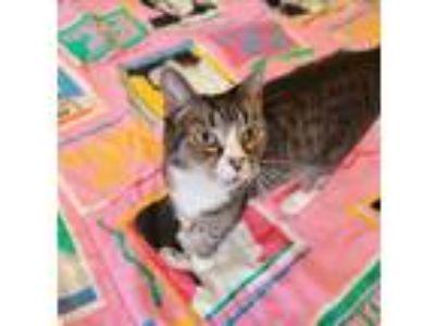 Adopt Marjan a Domestic Shorthair / Mixed cat in Charlottesville, VA (24660064)