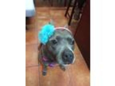 Adopt Kenzi a Pit Bull Terrier / Mixed dog in New Orleans, LA (23709212)