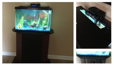 20 gallon fish tank, stand and LED Hood, with all you need. Lots of extras and fish included!