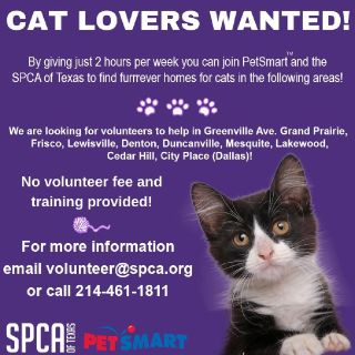Looking for cat lovers to help the SPCA of Texas