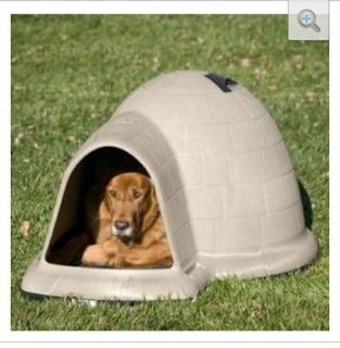 Leering Dog and his Doghouse
