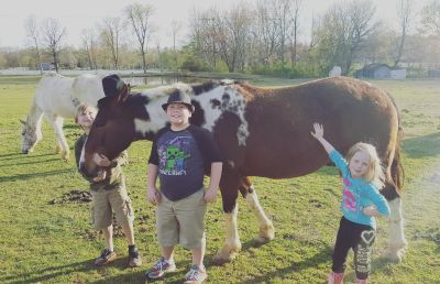 3 gelding horses looking for a forever home