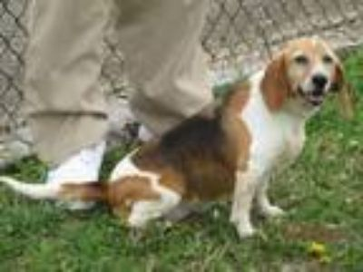 Adopt TWINKIE - Paws Behind Bars Trained a Beagle
