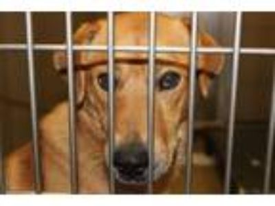 Adopt Strider a Mixed Breed