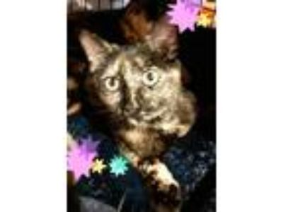 Adopt Tootsie a Tortoiseshell Domestic Shorthair (short coat) cat in Bethpage