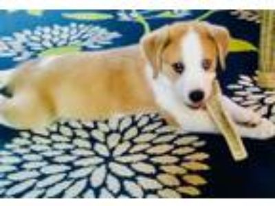 Adopt Lovable Monkey a Retriever (Unknown Type) / Hound (Unknown Type) / Mixed