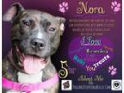 Adopt Nora a Brindle - with White American Pit Bull Terrier / Mixed dog in