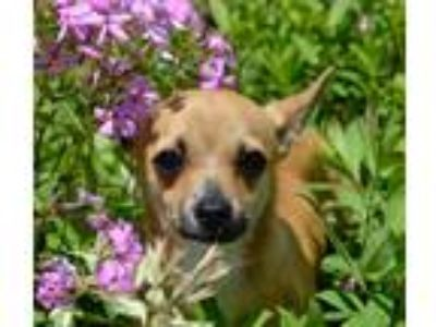 Adopt Ice Man a Terrier (Unknown Type, Medium) / Mixed dog in Canton