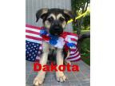 Adopt M-Dakota a German Shepherd Dog, Golden Retriever