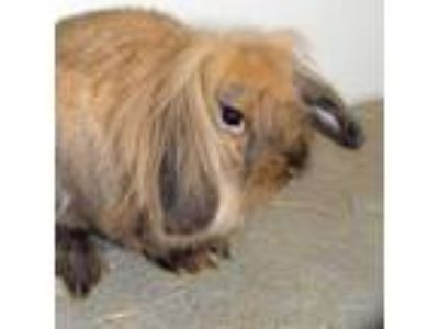 Adopt Cleo a American Fuzzy Lop