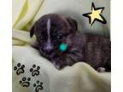 Adopt 5 Martini a Terrier, Shih Tzu