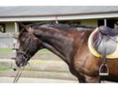 Adopt Archie a Thoroughbred