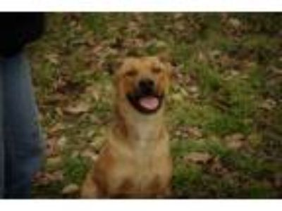 Adopt Sandy a Tan/Yellow/Fawn - with White Mixed Breed (Medium) / Mixed dog in