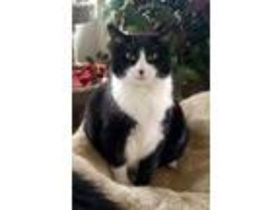 Adopt Brigeeta - FREE Adoption Fee and FREE Gift Bag a Tuxedo