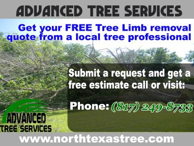 Advanced Tree Services ** !!Tree Limb removal fort worth