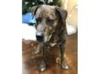 Adopt RILEY a Plott Hound, Mixed Breed