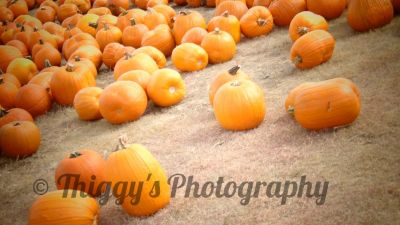 Thiggy's Photography Free