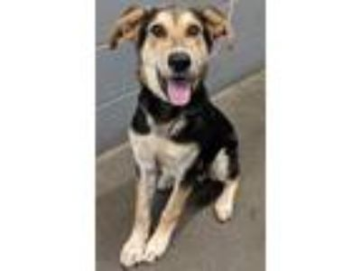 Adopt Crosby**NOT AVAILABLE UNTIL 6/26 a German Shepherd Dog, Mixed Breed