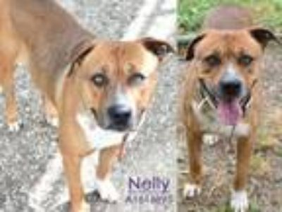 Adopt NELLY a Boxer, Mixed Breed